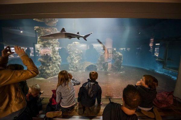 Aqua-Zoo в Дюссельдорфе
