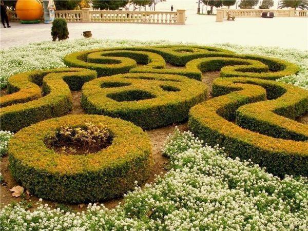 Бакинский ботанический сад