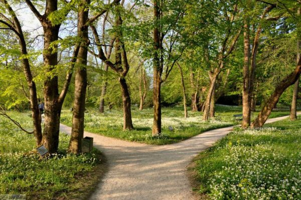 Ботанический сад в Любляне