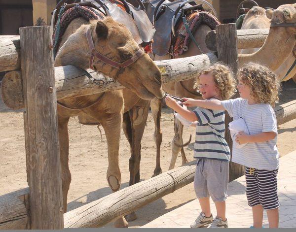 Camel park в Ларнаке