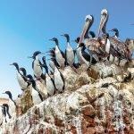 Птицы на скале в Паракасе