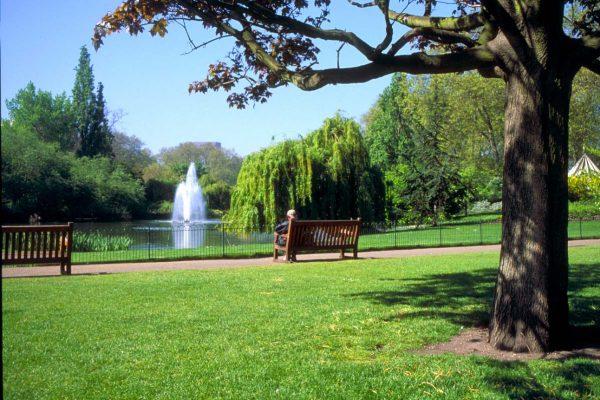 Дерево, скамья и фонтан в Гайд-Парке