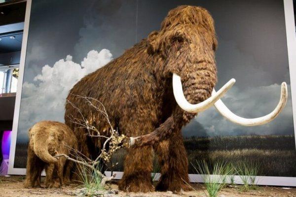 Экспонаты музея естественной истории недалеко от Тарту