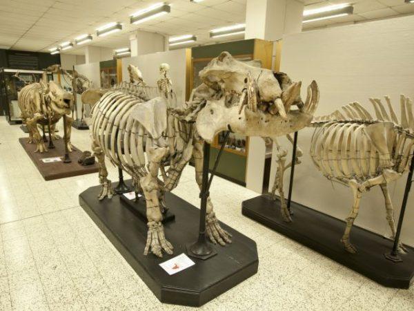 Экспонаты музея зоологии в Брюсселе