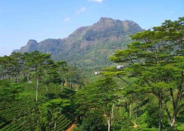 Гора Педро на острове Шри-Ланка