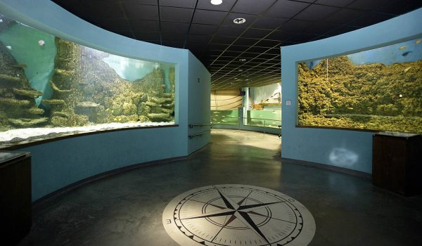Один из залов океанариума в Севилье