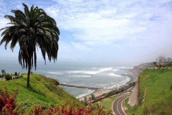 Пальма в районе Мирафлорес (Лима)