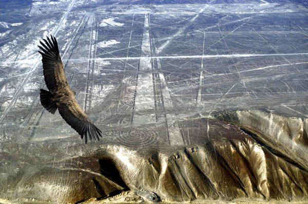 Полёт кондора над геоглифами пустыни Наска
