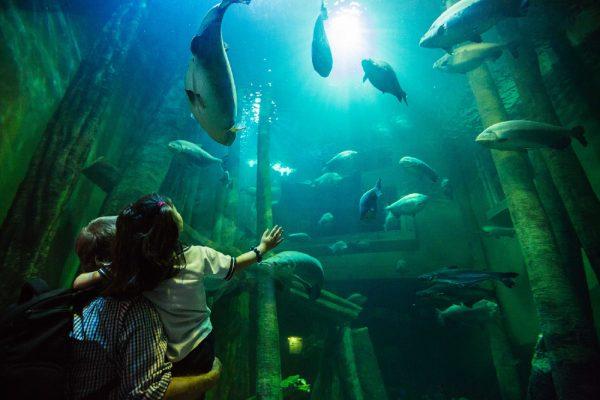 Речной аквариум Сарагосы