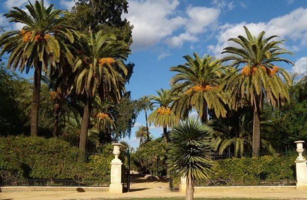 Сады Мурильо в Севилье