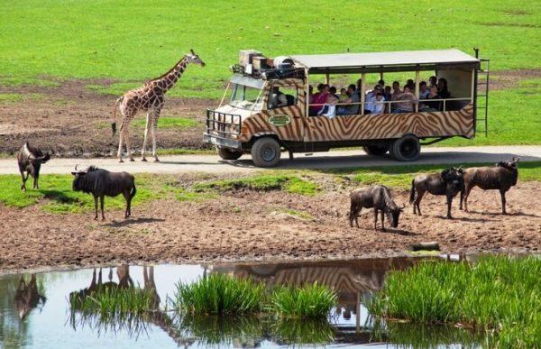 Сафари-парк«Серенгети» в окрестностях Ганновера