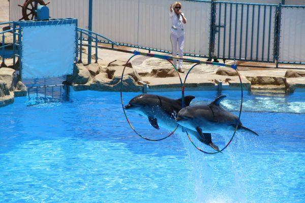 Дельфинарий в детском центре Fantasy Land