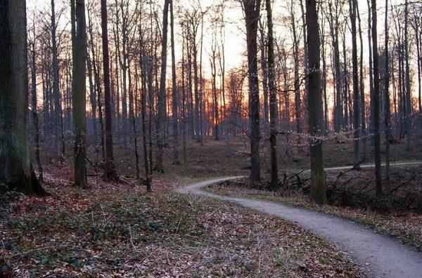 Тропка в Суаньском лесу недалеко от Брюсселя