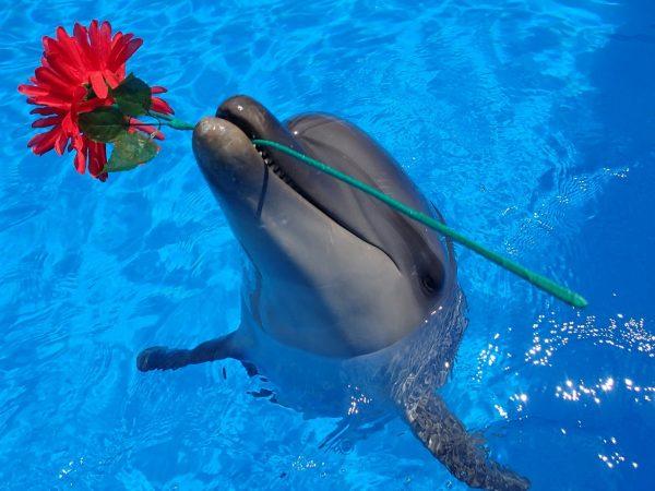 Дельфинарий в Бресте