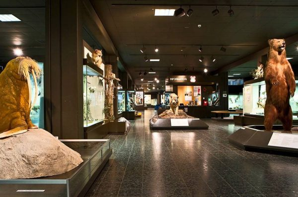Зоологический музей Гамбурга