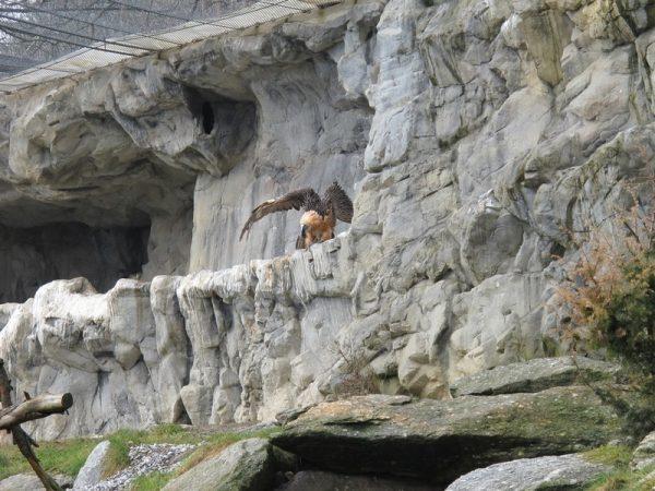 Альпийский зоопарк в Инсбруке