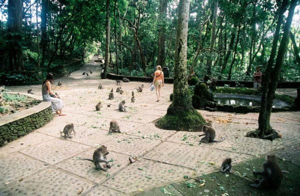 Центральная площадь в лесу обезьян