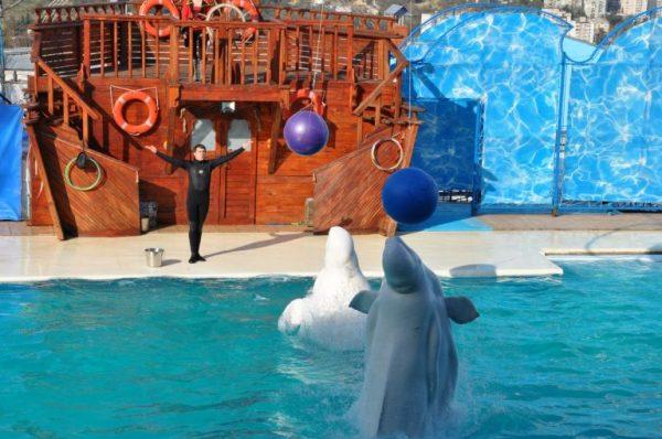 Дельфинарий «Акватория» в Ялте