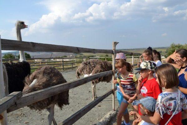 Денисовская страусиная ферма недалеко от Симферополя