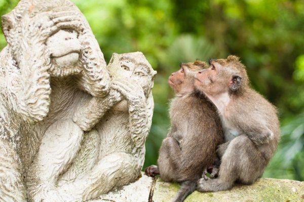 Лес обезьян