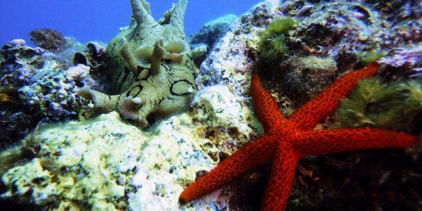 Морская звезда на дне Тирренского моря в Устике