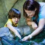 Женщина и ребёнок руками в аквариуме