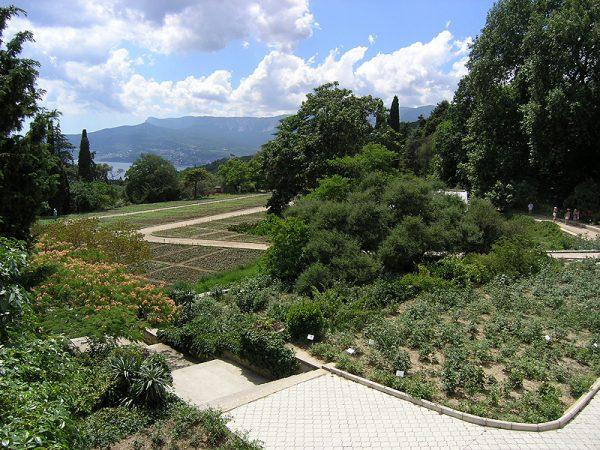 Никитский ботанический сад недалеко от Ялты