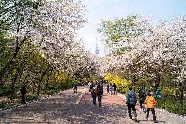 Парк Намсан с Сеульской телебашней