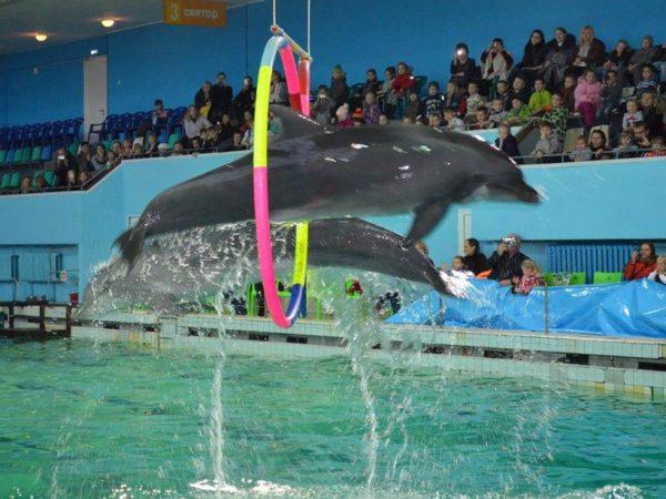 Представление в дельфинарии Санкт-Петербурга
