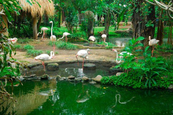 Ботанический сад Эка-Кария