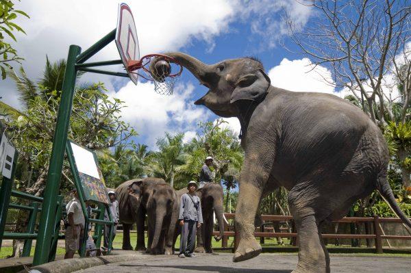 Слоновая деревня