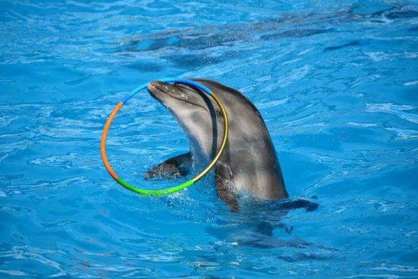 Городской дельфинарий