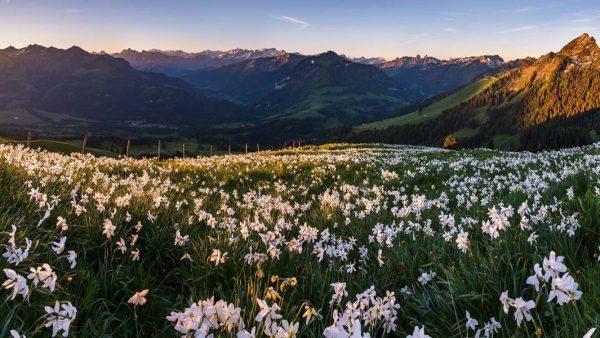 Альпийские луга возле Инсбрука