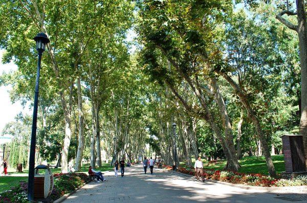 Аллея парка Гюльхане в Стамбуле