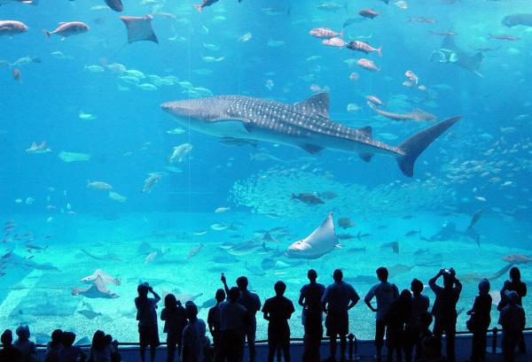 Люди наблюдают за акулами в океанариуме Генуи