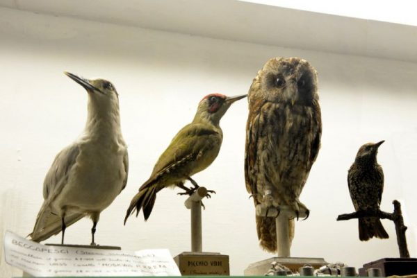 Чучела птиц в музее зоологии