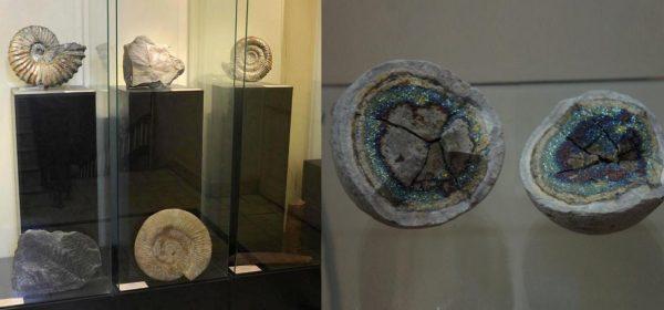 Экспонаты геологического музея в Ессентуках