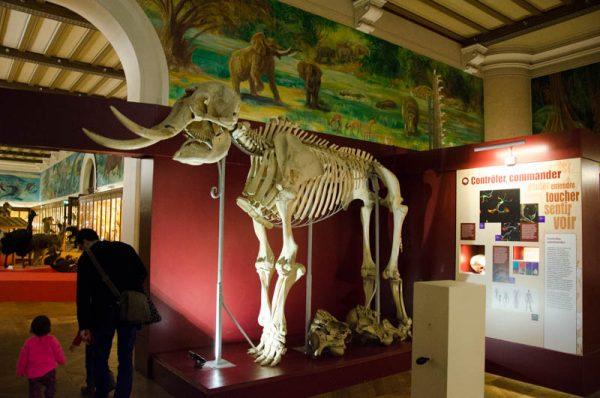 Экспонаты в Музее естественной истории во дворце Лоншан