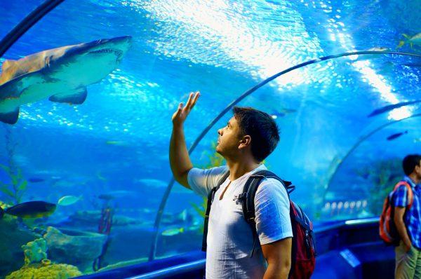 Мужчина в тоннеле аквариума смотрит на акулу