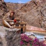 обезьяна на фоне храма