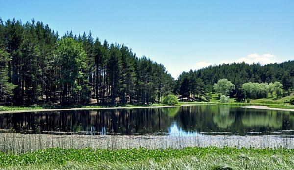 Озеро и деревья в парке Согуксу