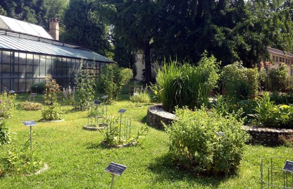 Растения и кустарники на территории Ботанического сада Болоньи
