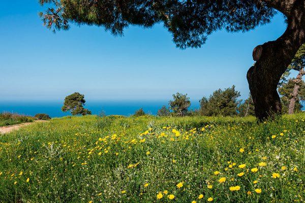 Зелёная лужайка с цветами в парке Кармель