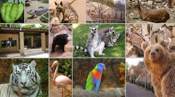 Животные и птицы зоопарка Хайфы