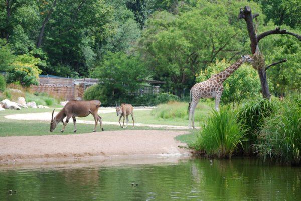 Зоопарк в Тет д'Ор