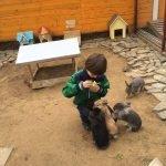 Мальчик кормит кроликов в «Зооландии»