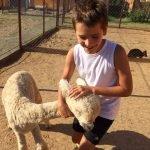 Мальчик и альпака в «Зооландии»