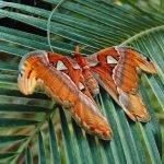 Бабочка сидит на ветке