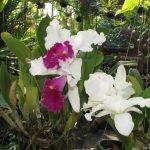 Цветки орхидеи в оранжерее парка