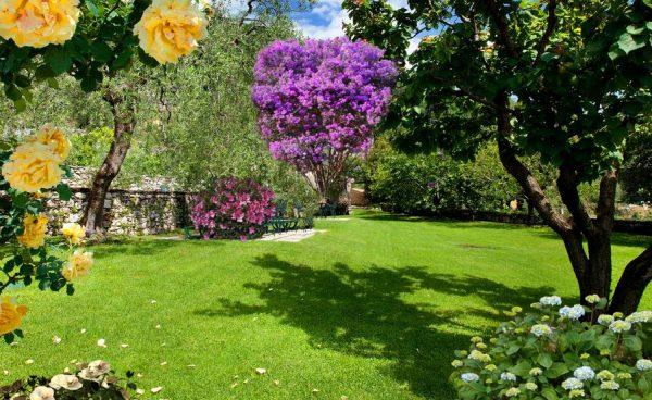 Цветущие кустарники и деревья в саду Ароматов